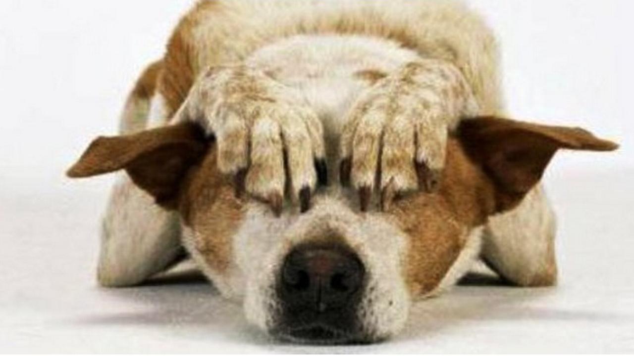 comportement chien castré