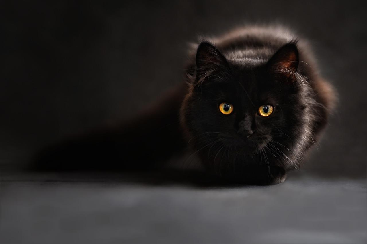 durée de vie moyenne chat de race