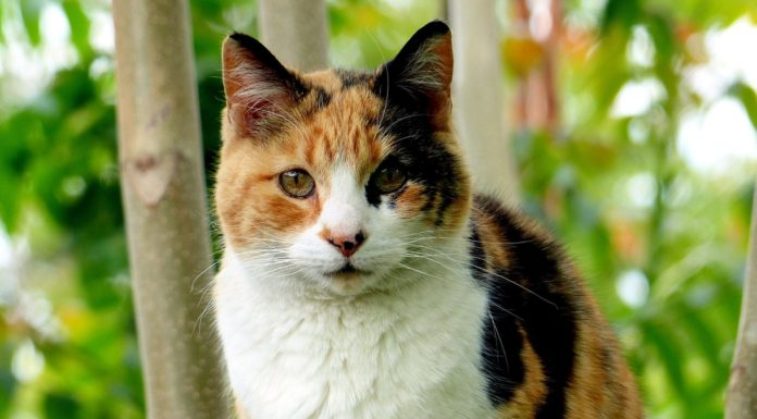 Chat isabelle