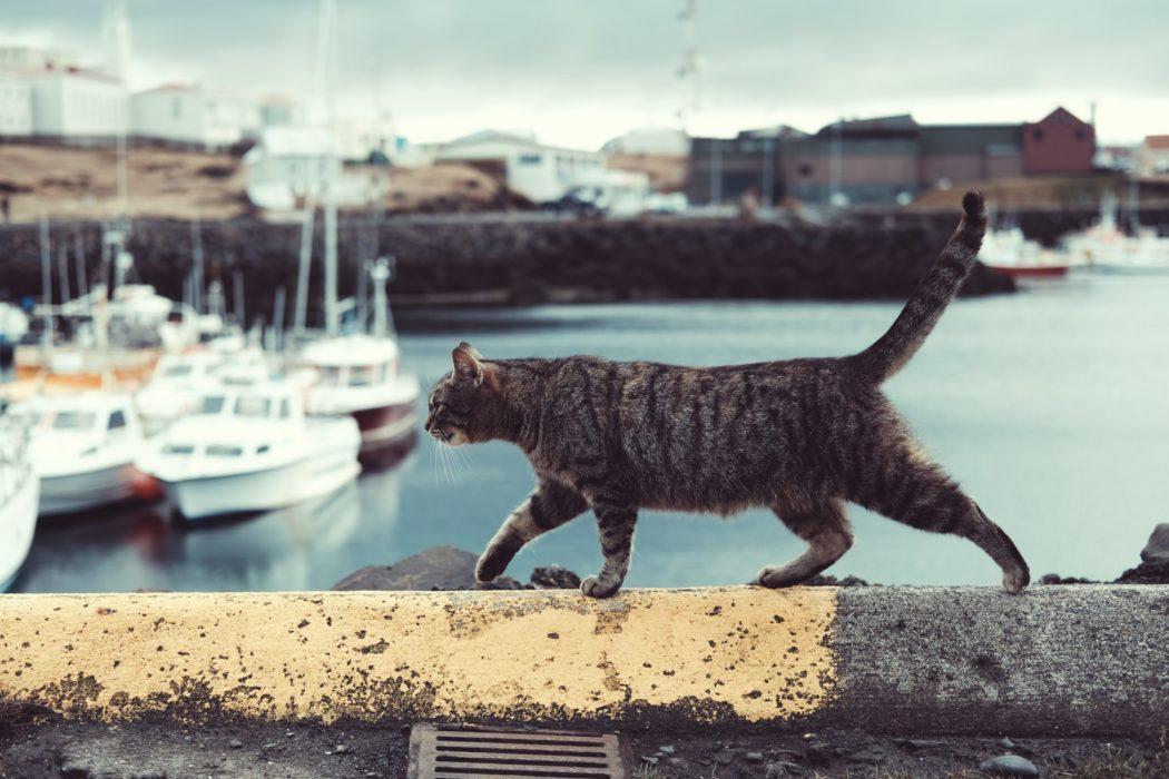 comment ne pas perdre son chat astuces accessoires
