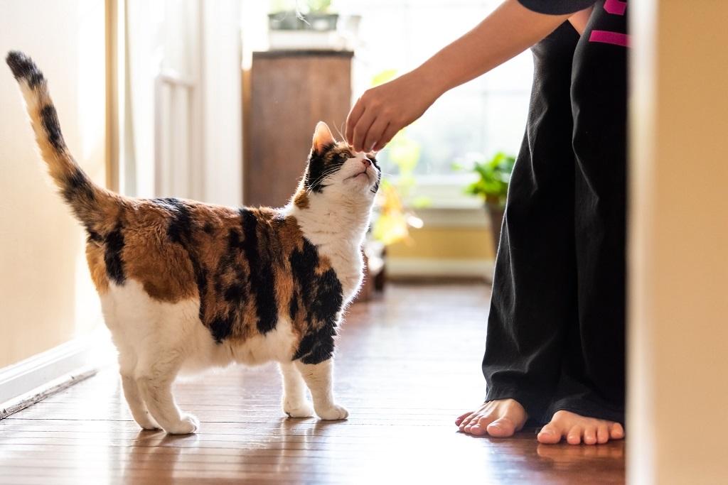 calmer les chaleurs d'une chatte