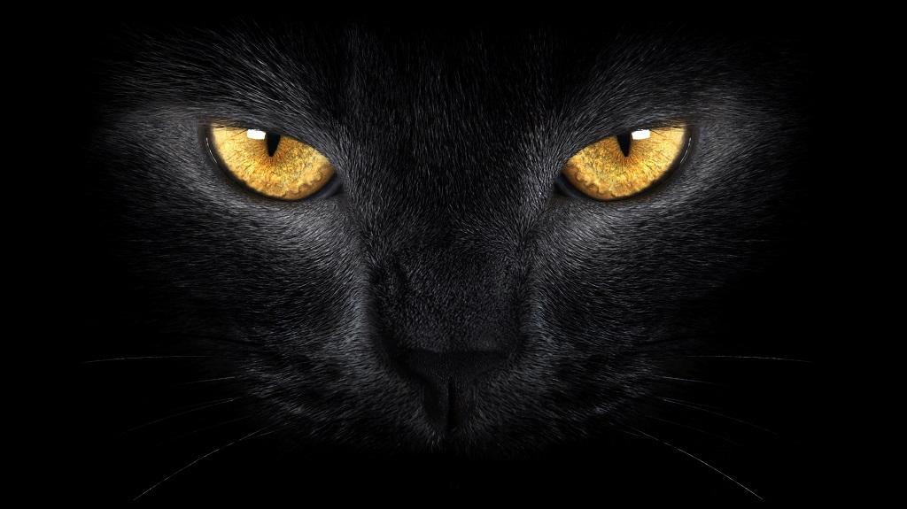 chat noir et superstitions