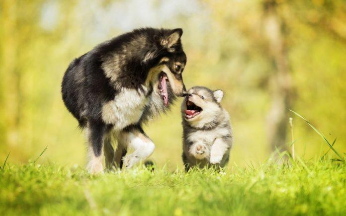 plus beaux chiens du monde