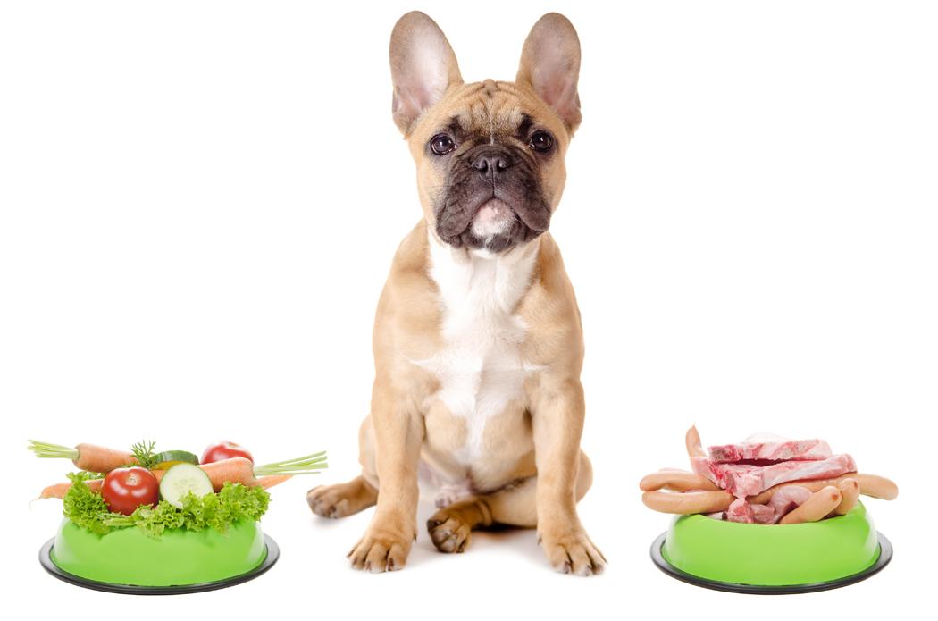Alimentation bio pour chien : vraiment meilleure pour l'animal ?