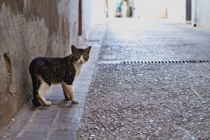 Comment retrouver un chat perdu
