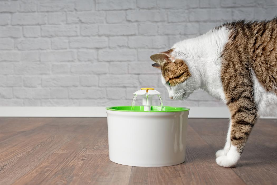 besoins en eau du chat