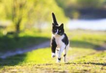 Répulsif natuel pour chat