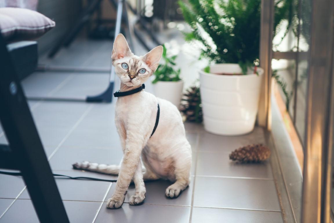 chat Rex dans un appartement