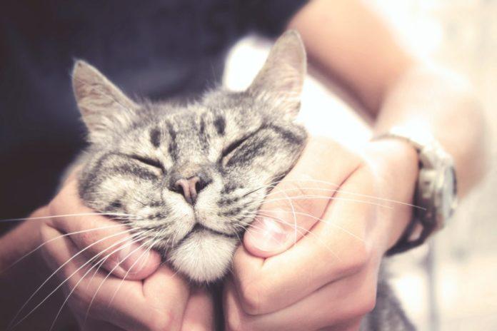 montrer à son chat qu'on l'aime