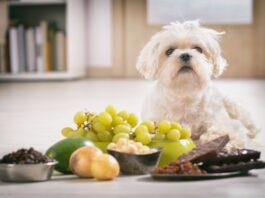 Quels sont les aliments toxiques et dangereux pour les chiens