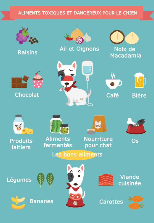 aliments dangereux et toxiques chez le chien