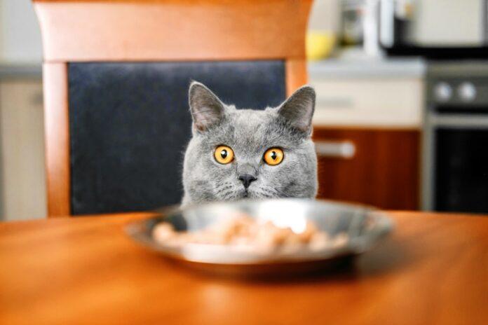 aliments toxiques et dangereux pour les chats