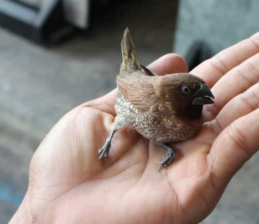 oiseau blessé que faire