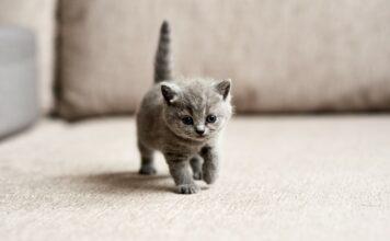 éduquer un chaton