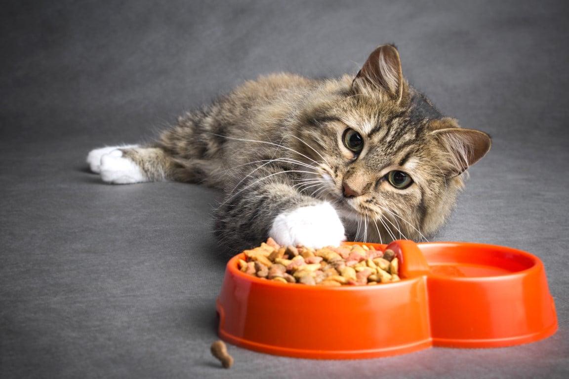 chat qui ne veut plus manger