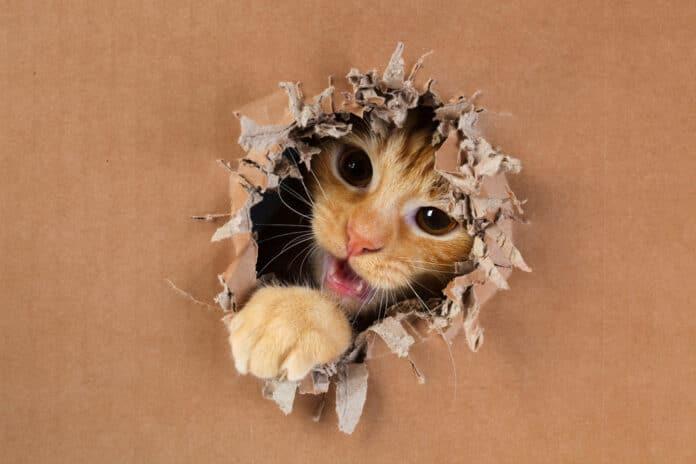 chaton fait des betises comment eduquer