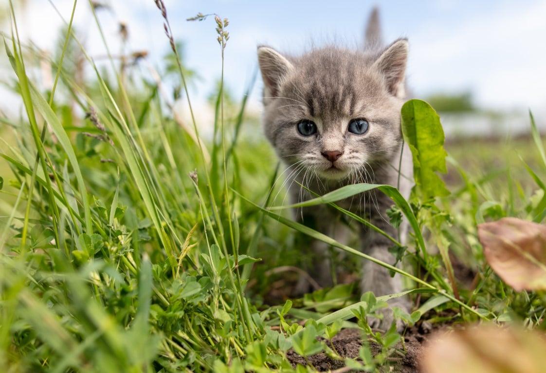 chaton qui sort pour la première fois