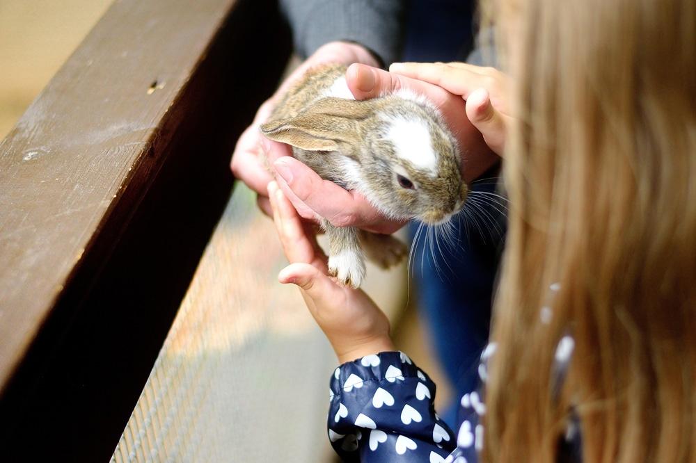 la durée de vie d'un lapin