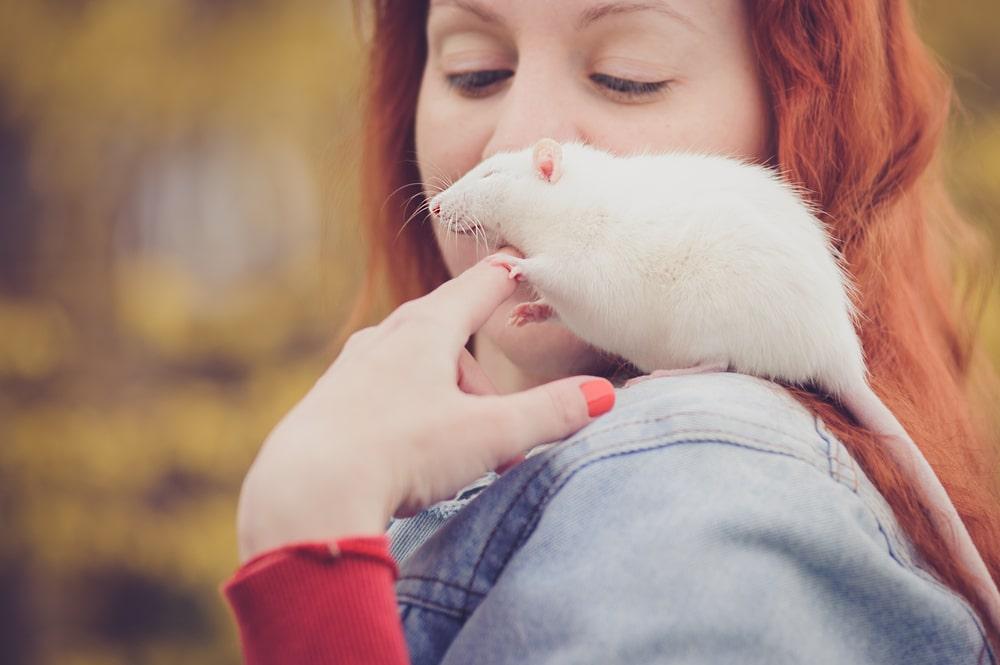 avoir un rat domestique