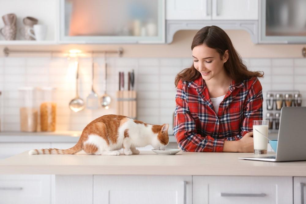 nourrir chat naturellement