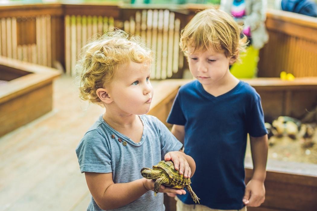 quel reptile choisir pour débuter