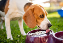 Comment rafraîchir son chien lors de fortes canicules ?