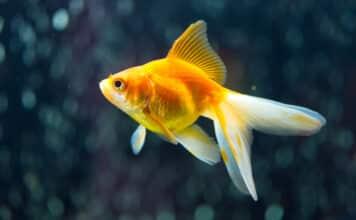 Top 10 des poissons japonais les plus emblématiques