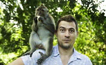 Adopter un singe est-il possible d'avoir un singe domestique