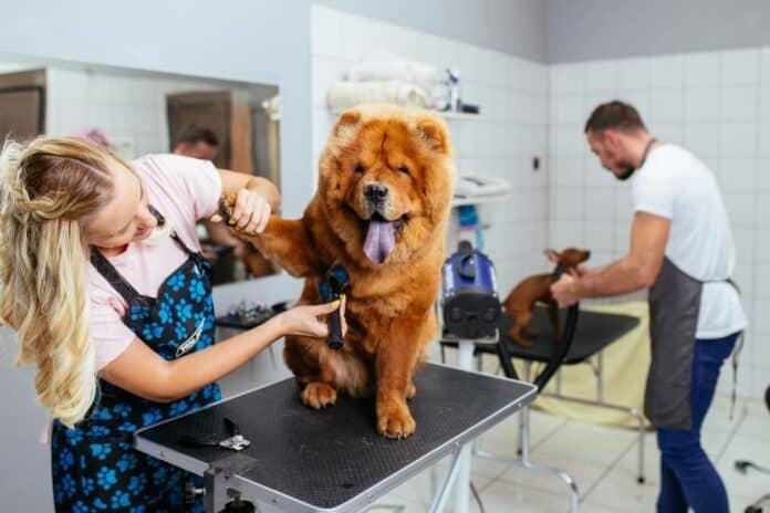 Le toiletteur, au secours des maîtres et de leurs chiens !