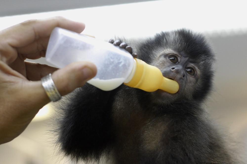 adopter singe