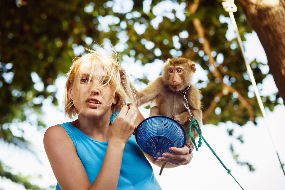 adopter un singe