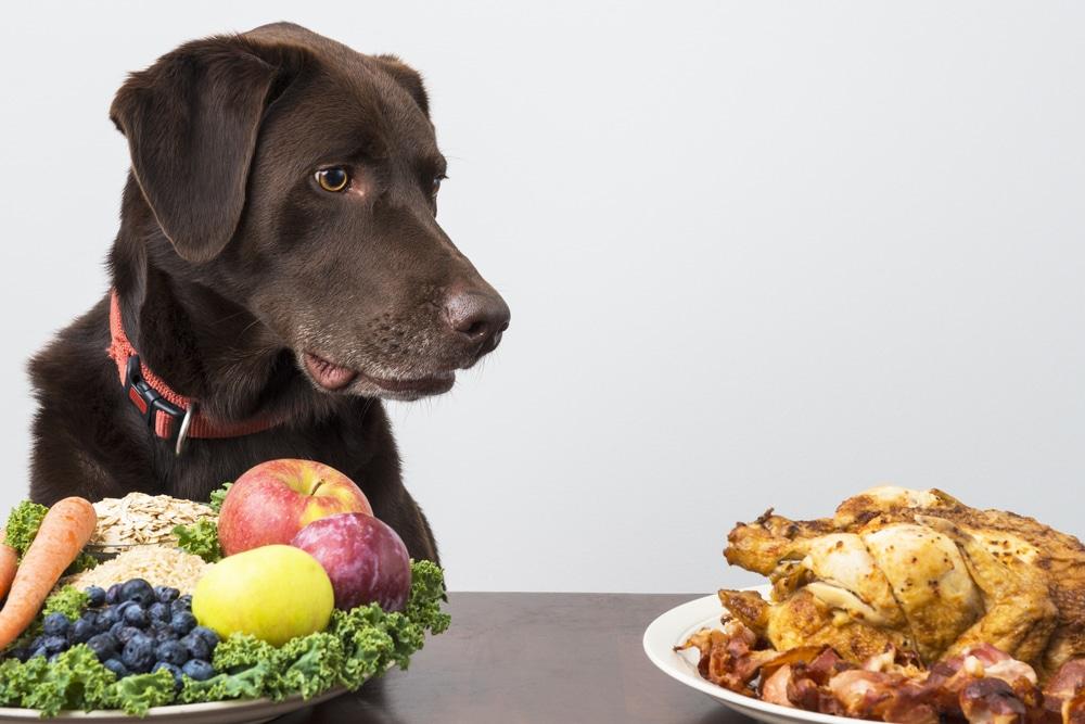 nourriture chien problème de foie
