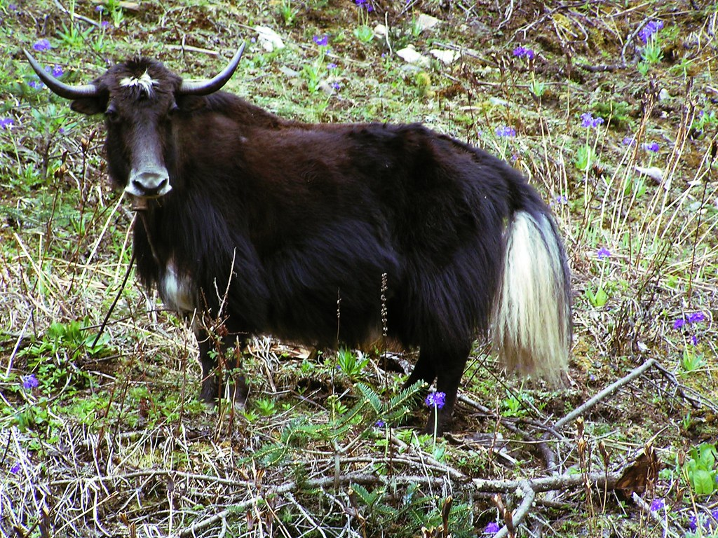 animal hybride réel