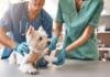 Comment connaître le numéro du vétérinaire de garde en cas d'urgence