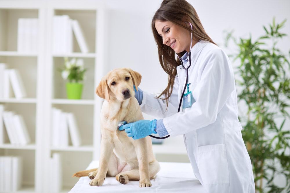 numéro du vétérinaire de garde