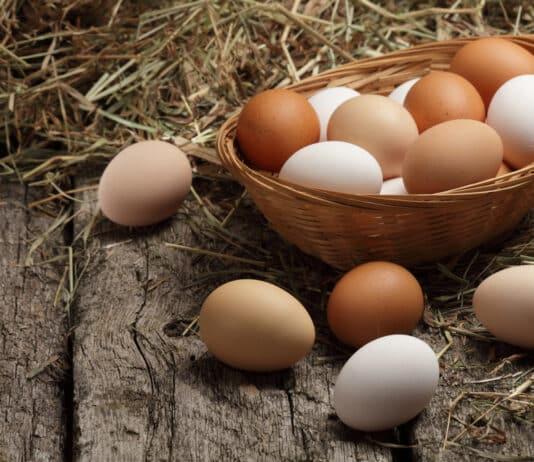 Mes poules ne pondent plus pourquoi et que faire