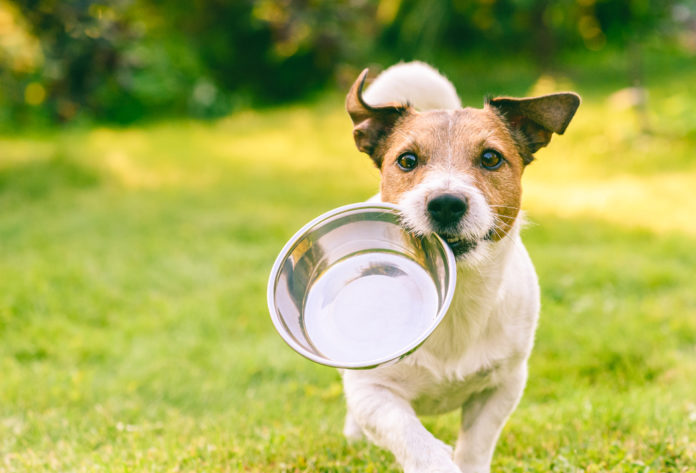 comment choisir la meilleure alimentation pour mon chien conseils