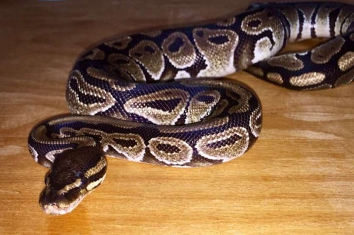 reptiles appartement