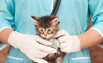 Assurance pour chat : quels sont les motifs de remboursement les plus fréquents ?