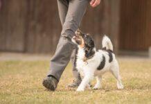 Quelle méthode pour éduquer son chien avec efficacité et bienveillance ?