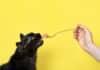 Qu'est-ce que l'alimentation humide pour chat ?