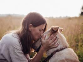 L'arthrose du chien