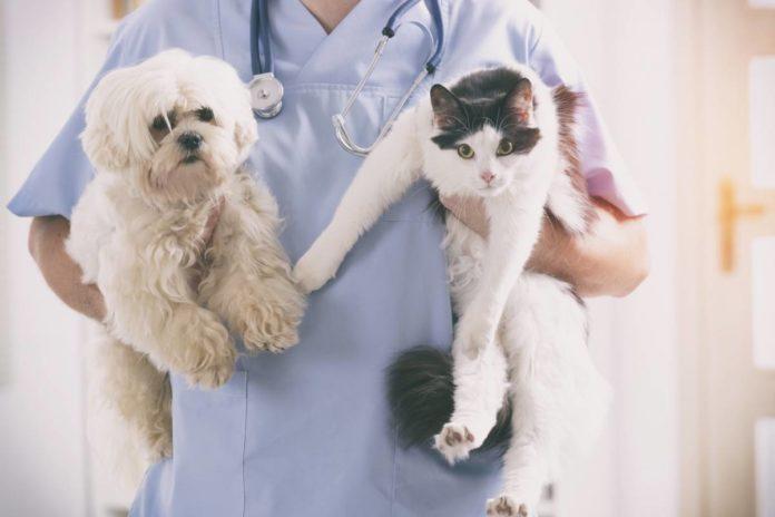 vétérinaire qui prend soin d'un chat et d'un chien